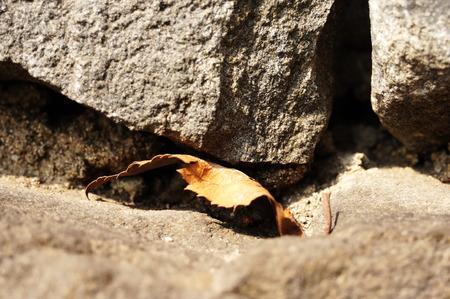 dried leaf: Dried leaf on a rock wall