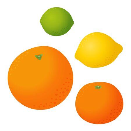 Fresh citrus fruits vector set. Orange tangerine lemon lime isolated