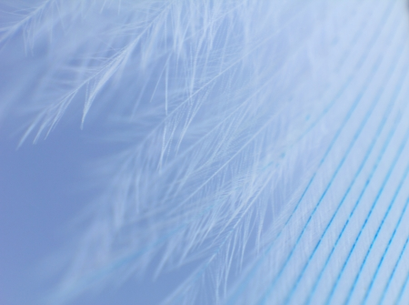 Blue feather close up