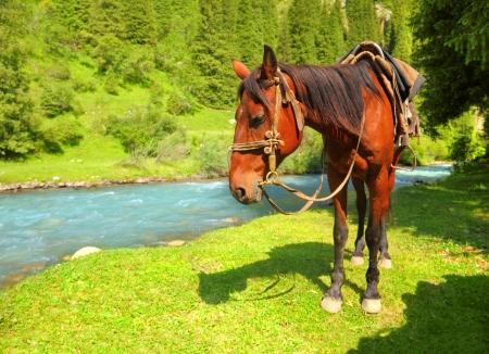 Portrait of chestnut harness horse Stock Photo