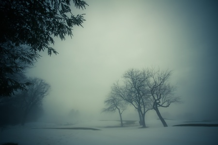 An atmospheric image of a winter landscape