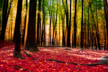 Colorful wooded forest scene in autumn