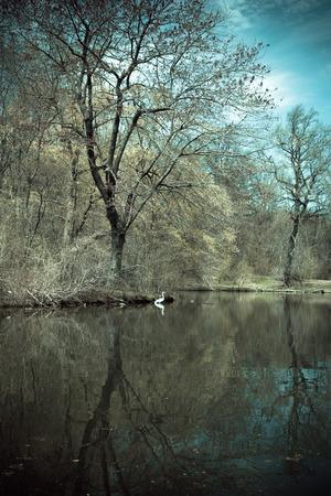 prospect: Paysage avec des arbres de l'�tang et de la grue vus � Prospect Park de Brooklyn