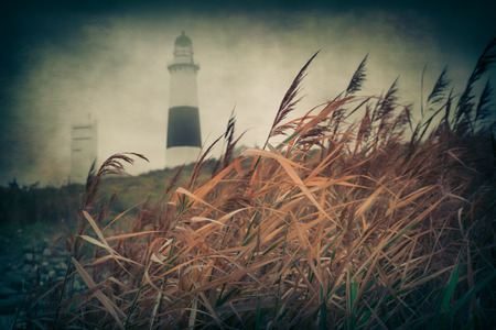 montauk: Nautical theme image with tall reeds and Montauk Point Lighthouse, Long Island NY