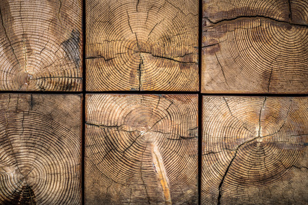 Natural wood texture with grain and concentric rings