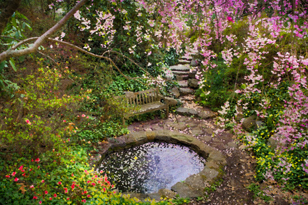 painterly: Photograph of spring garden with artistic painterly effect