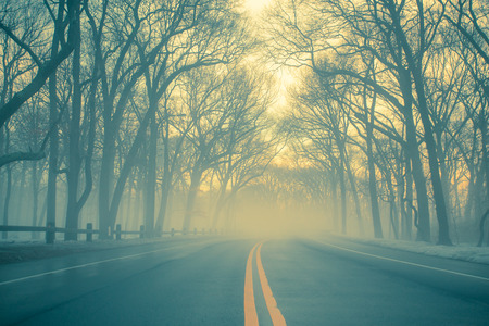 morning light: Morning fog on empty rural road Stock Photo