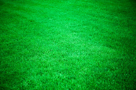 lawn grass: perfect green grass lawn Stock Photo