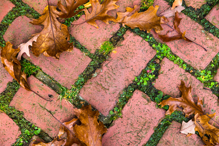 adoquines: Brick garden pavers with fallen leaves