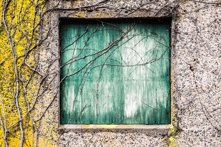 boarded: Boarded green window with vines on grungy abandoned building. Stock Photo