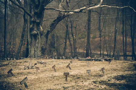 Vintage toned image of desolate cemetery with unmarked graves