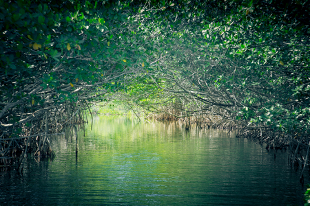 everglades: mangroves at Everglades National Park in Florida Stock Photo