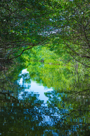Everglades national park: mangroves at Everglades National Park in Florida Stock Photo