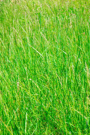 Tall Grass Texture For Background Stock Photo Picture And Royalty