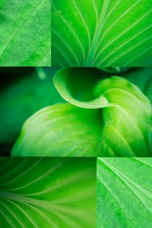 green plants: macro green leaf collage