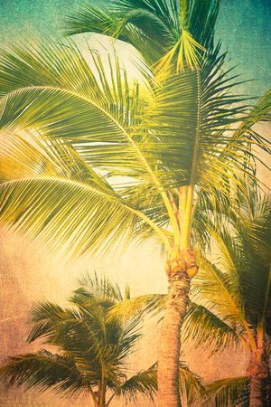 Vintage textured tropical palm trees
