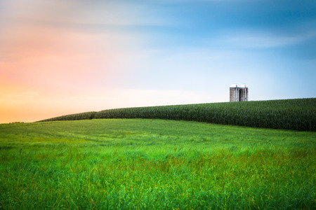 Beautiful farm field with grass, silo and corn at sunset, Amish Country, Lancaster Pennsylvania