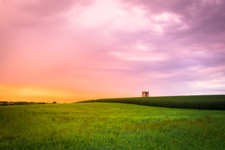 dyllic: Beautiful farm field with grass, silo and corn at sunset, Amish Country, Lancaster Pennsylvania