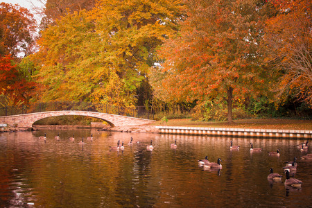 Scenic autumn duck pond with footbridge Stock Photo