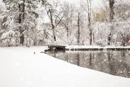 Beautiful rural winter scene with footbridge, trees, pond with falling snow 免版税图像