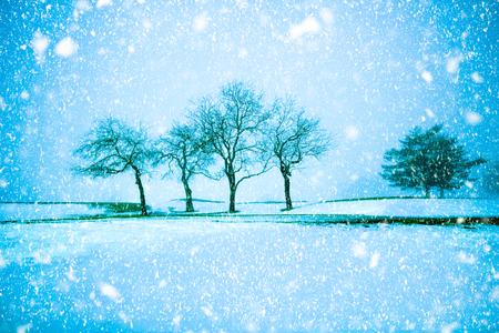 Trees on snowy evening with snowflakes falling during winter blizzard
