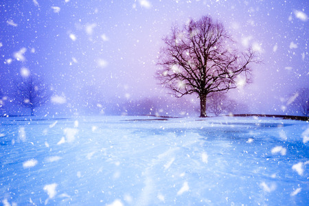 Trees on snowy evening with snowflakes falling during winter blizzard 版權商用圖片 - 114702412