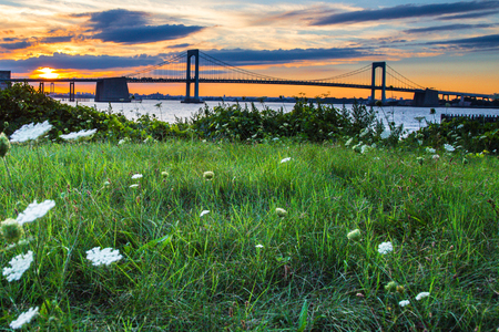 Grass and flowers with Throgs Neck Bridge, New York City at sunset