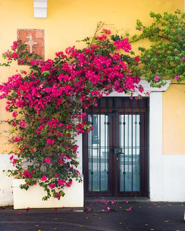 Exterior door covered in flowering vines on yellow building Old San Juan Puerto Rico Archivio Fotografico