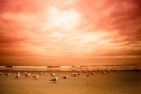 Seagulls on Long Island beach with ocean and colorful sunset Stock fotó - 137879615