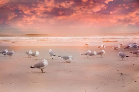 Seagulls on Long Island beach with ocean and colorful sunset