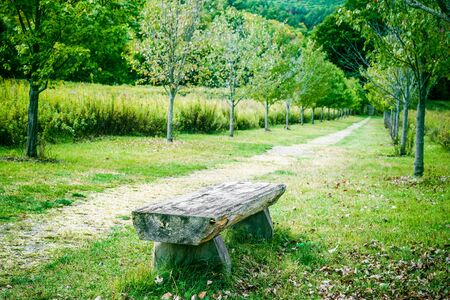 Nature landscape with Relaxing bench and path in park Stock fotó