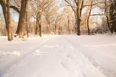 Snowy winter path through woods