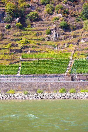 Terraced grape vineyard seen along the Rhine River, Germany