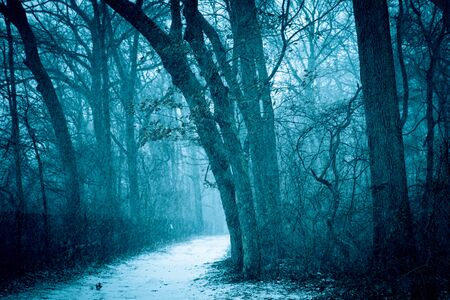 Winter landscape of trees with snow falling on path through the woods