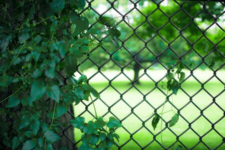 Chain-link fence with trees and leaves on summer day
