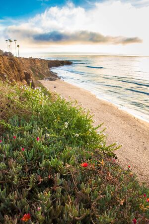 Southern California landscape from Sunset Cliffs with Pacific Ocean, sand and wildflowers. 版權商用圖片