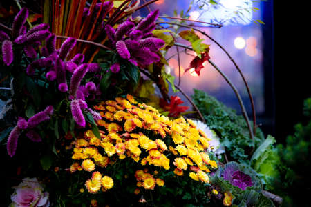 Floral still life at night with vibrant colors and bokeh lights Stockfoto