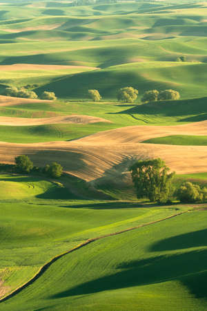 Green rolling hills of farmland wheat fields seen from the Palouse in Washington State USA