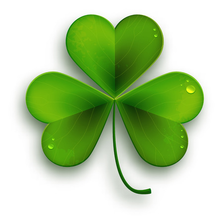 shamrock: Saint Patricks Day symbol, vector realistic shamrock leafsolated on white Illustration