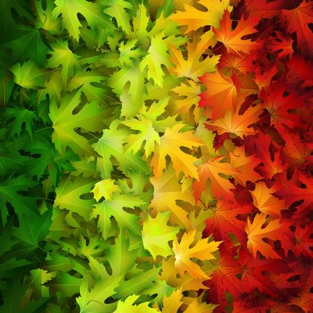 hojas de colores: Fondo de vector de oto�o, tel�n de fondo natural con hojas de colores