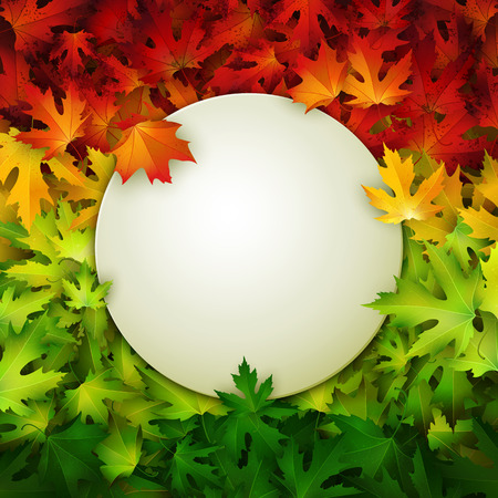 White banner for your design on colorful autumn leaves background, vector illustration