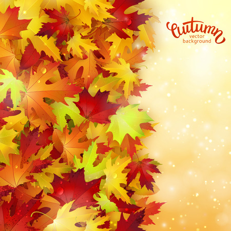 autumn leaves background: Vector background with colorful autumn leaves, card template, natural backdrop