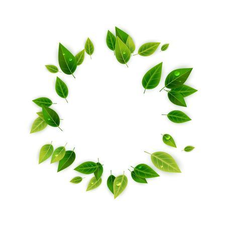 Cadre décoratif de feuilles vertes, illustration vectorielle Vecteurs