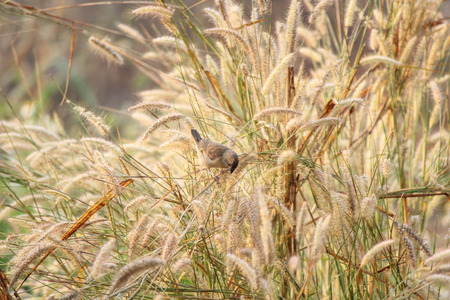 grasses: Little bird among grasses Stock Photo