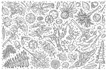 Hand drawn tree set doodle vector illustration background