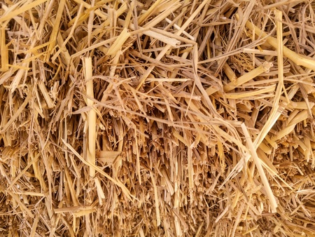 up: Close up hay straw background. Stock Photo