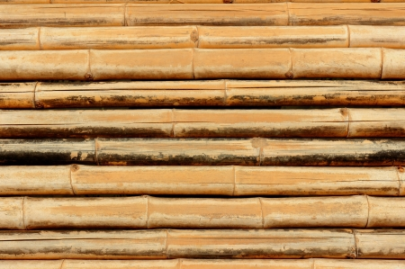 Bamboo Background. photo