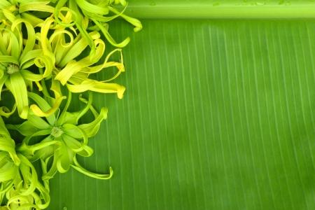 Beautiful flower on banana photo