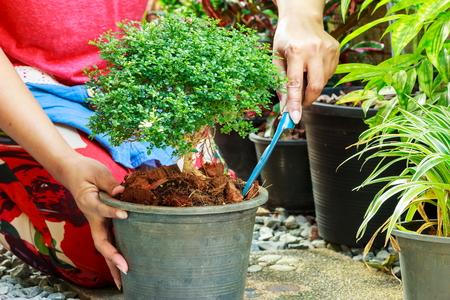 plantando arbol: Relajaci�n femenina con la plantaci�n de �rboles.