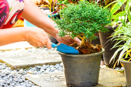 sembrando un arbol: Mujer que planta un �rbol en el jard�n. Foto de archivo